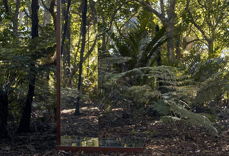 New Zealand fern scenic image
